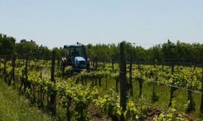 Organic AOC Côtes de Duras Vineyard