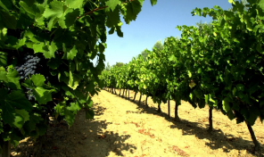 Rare Vineyard Property on 42 Hectares, AOC Côtes de Provence